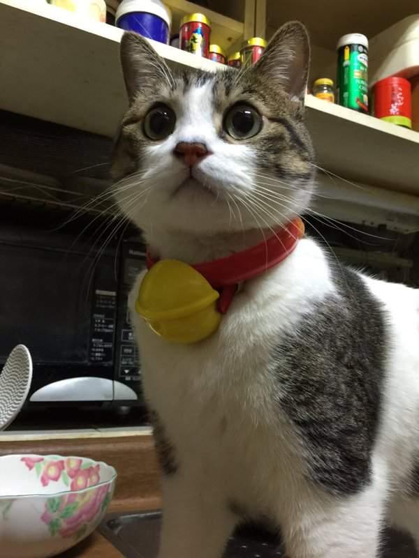 cos可爱猫咪