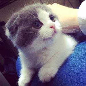 萌宠猫咪头像