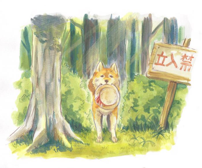 柴犬最初是用来狩猎大型猎物,但是现在他们用于狩猎较小的动物。在日本的城市、郊区和乡村都可看到柴犬。柴犬的名字发源于日本中央高地,在文献上,为昭和初期的日本狗保存会的会刊「日本狗」所采用。「柴」是「打柴人」的时候的「柴」,指小型的杂木。由于柴犬能巧妙地穿过杂木帮助打猎,而且红褐色的毛色与枯萎的柴相似,故名。亦有人认为古语的「柴」,是把信州的柴村作为起源的意思。