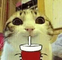 超级可的猫咪表情下载表情包地图片大全快跑图片