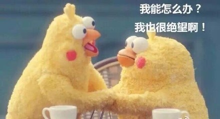 超火的鹦鹉兄弟 脆皮炸鸡鹦鹉表情包下载