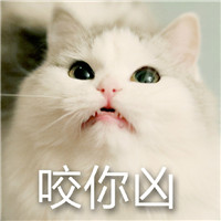 猫咪超凶,qq表情,表情包,斗图