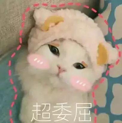 超可爱表情系列猫咪笑喷了的表情动态图片大全撒个娇萌死你
