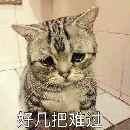 超可爱猫咪系列表情包