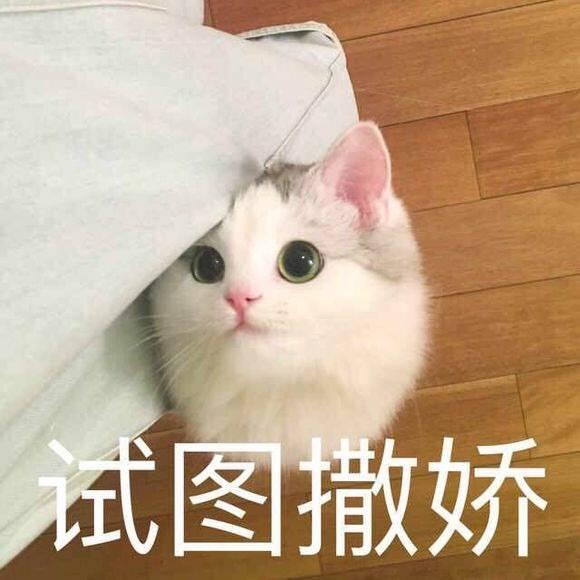 超可爱表情系列猫咪加动态表情包字幕撒个娇萌死你图片