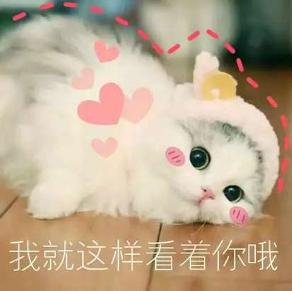 超可爱猫咪系列表情撒个娇萌死你诸葛亮厚颜无耻表情动态包图片