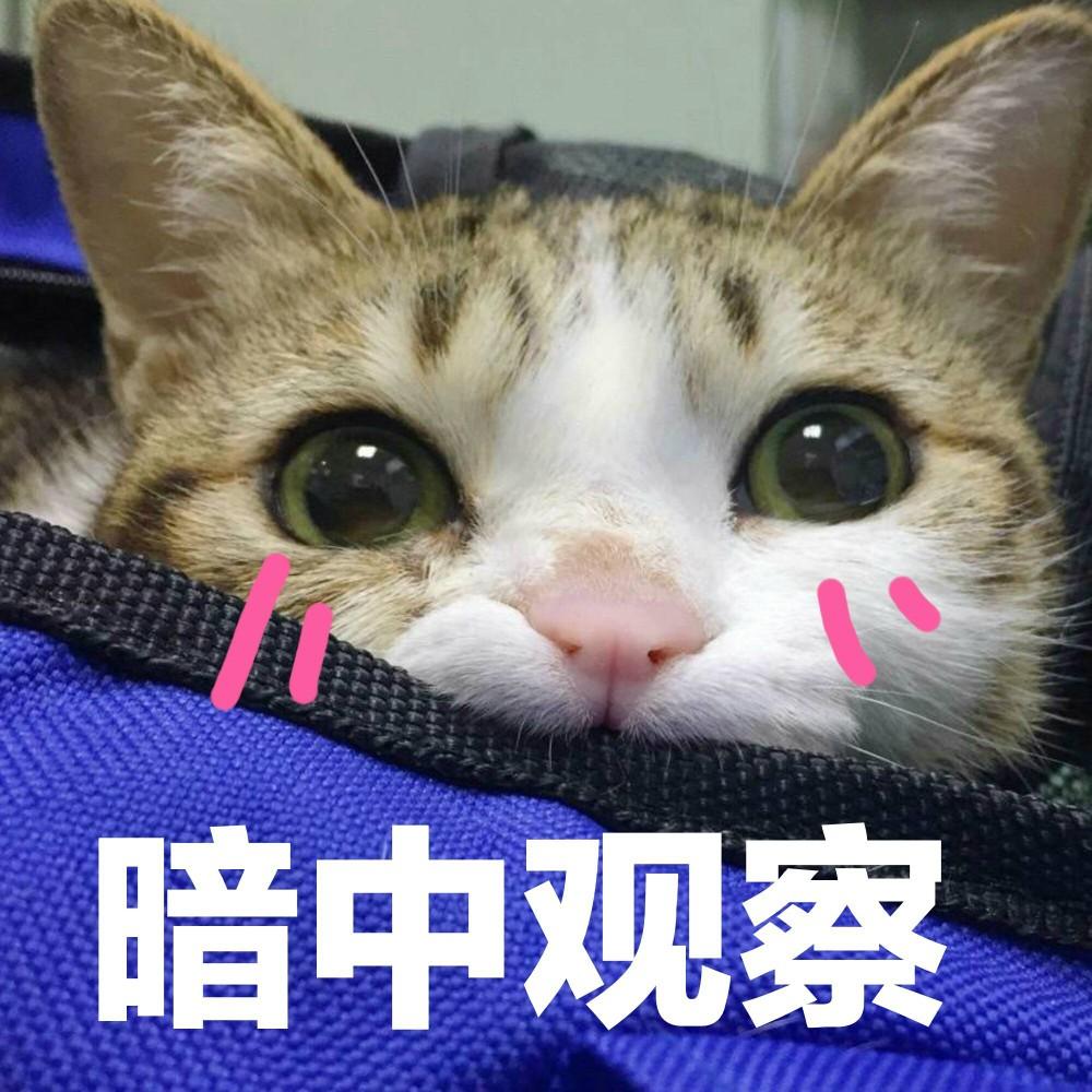 搜查官_超可爱猫咪系列表情包 撒个娇萌死你,萌娘资源站