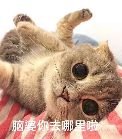 超可爱表情系列表情撒个娇萌死你扇子扇系列猫咪包图片