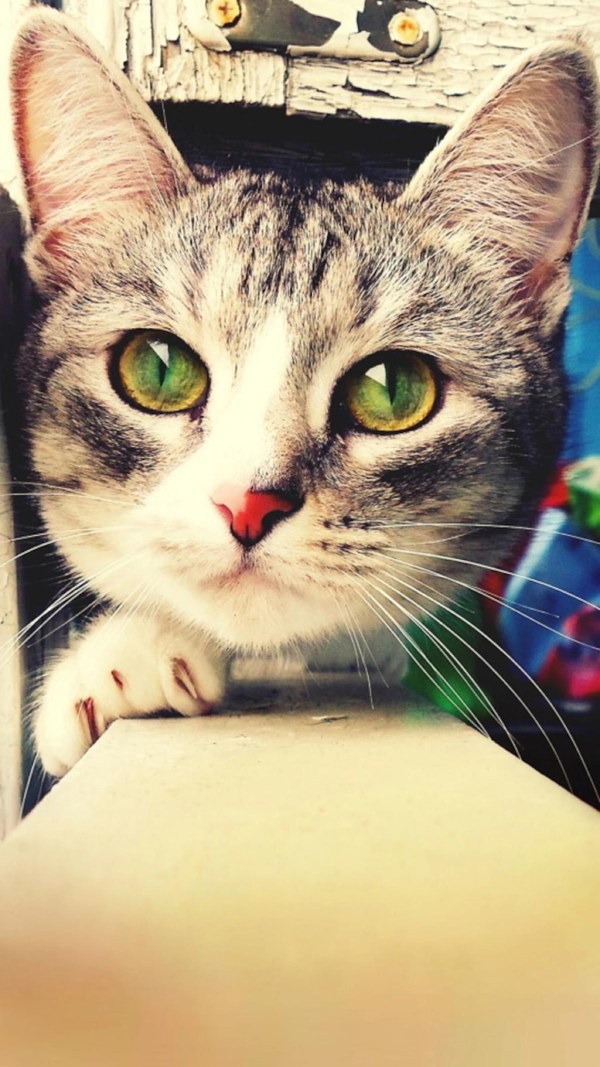 猫咪超可爱 喵星人手机壁纸下载