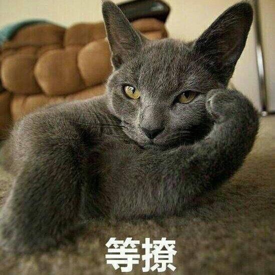 搞怪小猫带字图片表情表琐情猥包猫qq表情图片