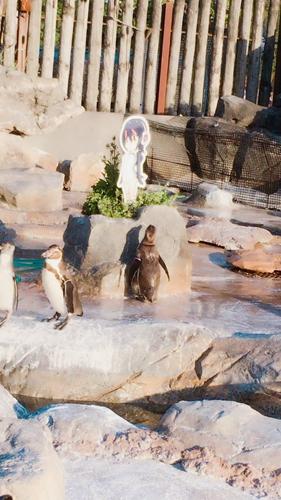 企鹅,优筑田行子,兽娘动物园,东武动物园,呼噜噜