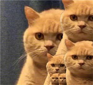 搞笑表情包,小猫表情包,qq表情包