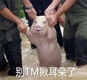 微笑猪表情包,洪水猪表情包,发洪水救猪