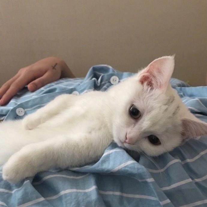 喵星人图片,猫咪图片,小猫图片