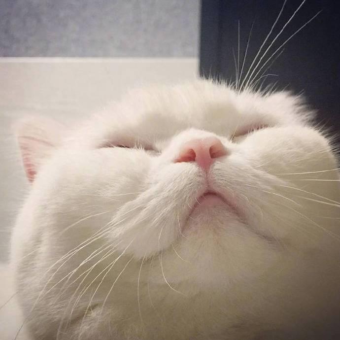 喵星人图片,猫咪图片,小猫图片,猫头像