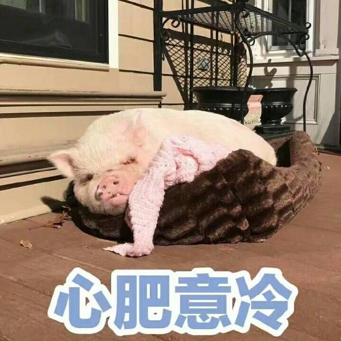 小猪表情包,猪表情包,下载,猪精女孩表情包