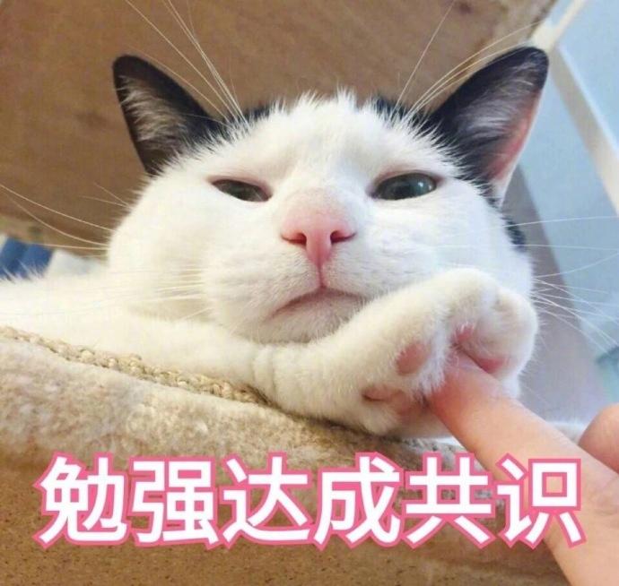 超傲娇图片微信聊天表情凶猫咪表情大全图片