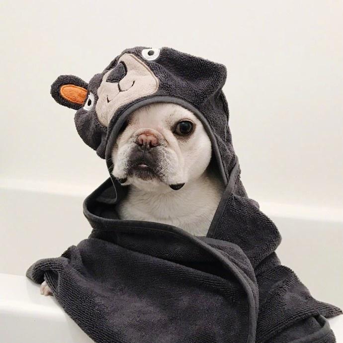 动物头像,狗子头像,可爱头像,