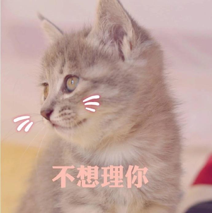 猫咪表情包,qq聊天表情包,微信聊天表情包