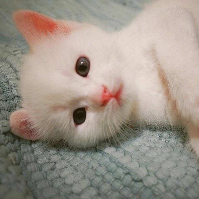 猫咪头像,猫图片,喵星人头像