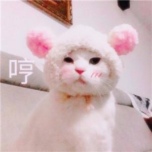 猫头像,可爱头像,猫咪头像,喵喵