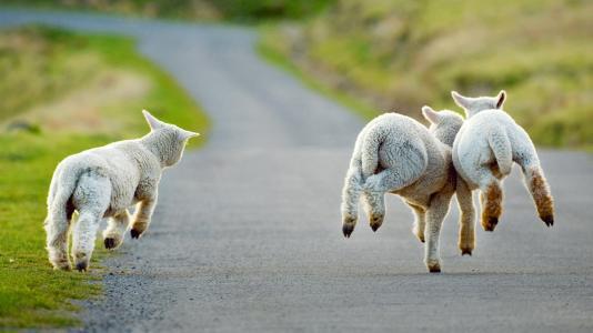 2019年1月26日M20梦次元冬日祭动漫展-今天开始放羊!寒假第一Zhan! 展会活动-第1张