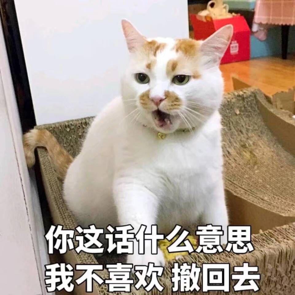表情包,猫咪表情,沙雕表情