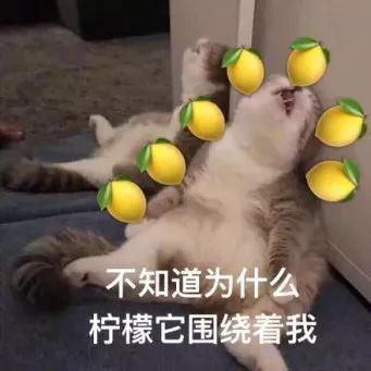 上坂堇,声优,政委