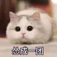 表情包,可爱表情,沙雕表情,猫表情,撩妹表情包