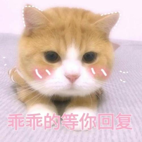表情包,可爱表情,沙雕表情,套路表情包,撩妹表情包,猫表情
