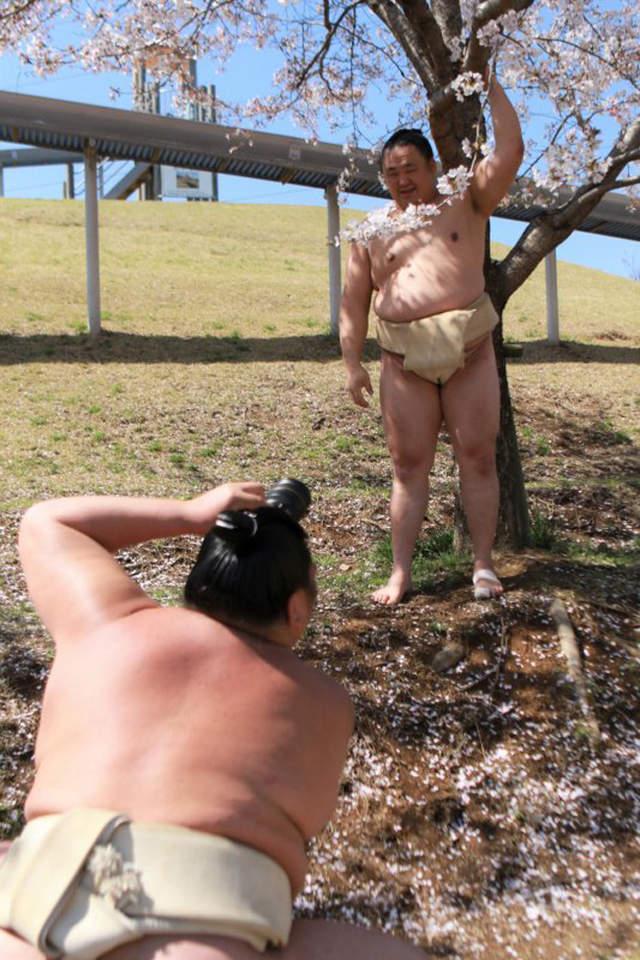 宅男福利,上半身裸图,樱花下的半裸写真组图